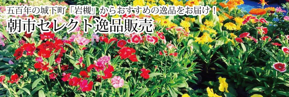 岩槻安穏朝市〜五百年の城下町「岩槻」の朝市〜
